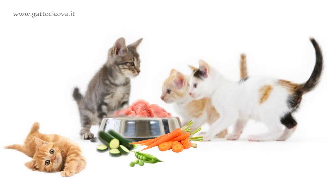 Prevenzione nella Ciotola del Gatto