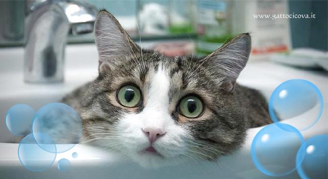 Bagno al gatto - Come fare il bagno al gatto ...