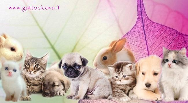 Counselors Olistici per Animali