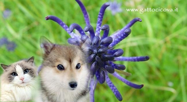Artiglio del diavolo harpagophytum procumbens for Antinfiammatorio cane