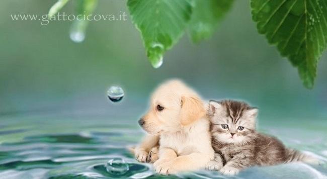 Drenaggio Gemmoterapico nel Cane e Gatto