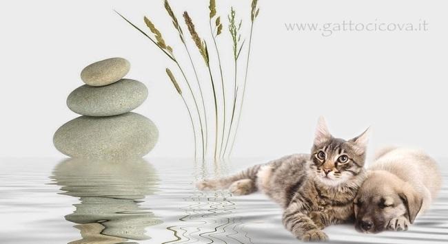 Litoterapia Dechelatrice Cane Gatto