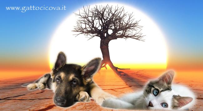 Malattie respiratorie gatto e cane