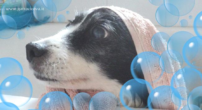 Bagno al cane naturale per cute e pelo - Bagno cane dopo antipulci ...