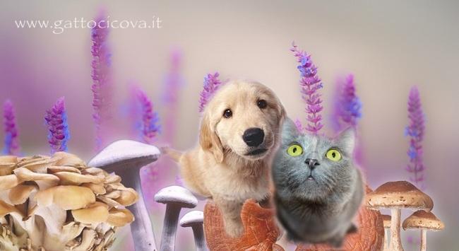 Micoterapia gatto cane