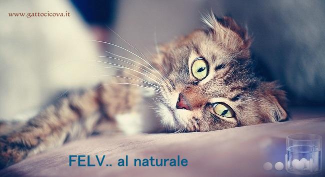 FeLV Gatto Rimedi Naturali