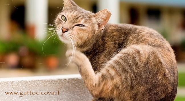 Gatto con dermatite felina