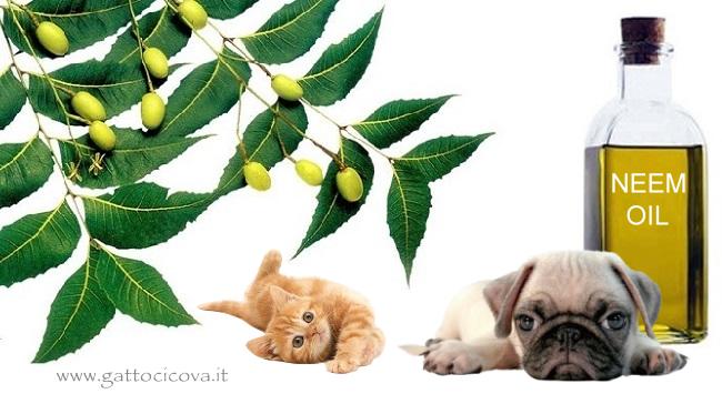 Olio di Neem nel Gatto e Cane