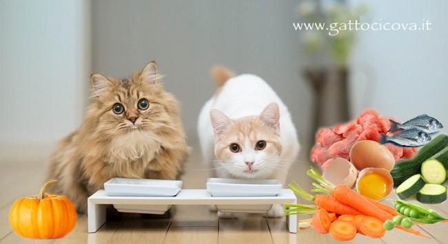Alimentazione Naturale Gatto