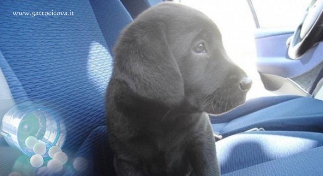 Quando un Cane soffre di Mal d'Auto