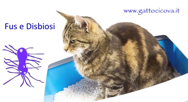 FUS Gatto