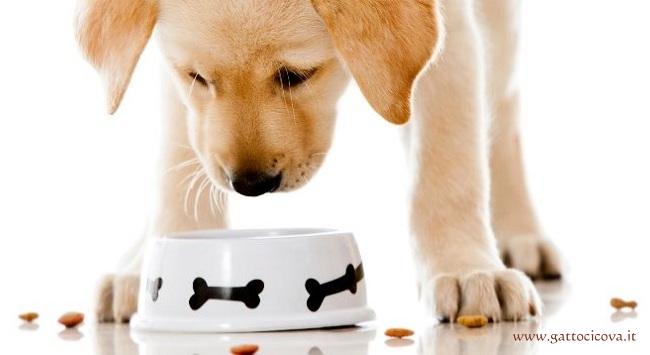 Nutrizione Casalinga per il Cane