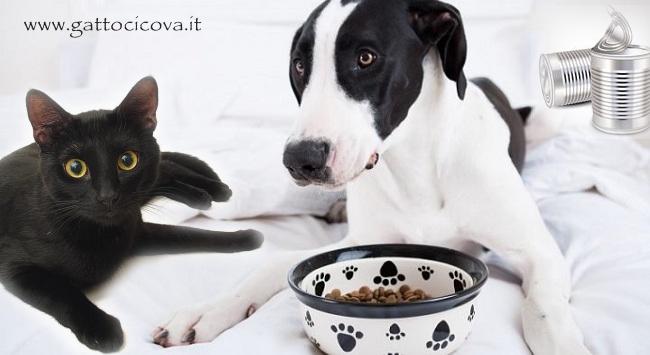 Intolleranze Alimentari Gatto Cane