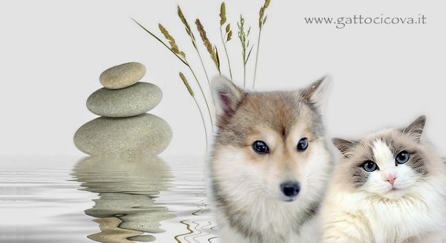 Depurazione nel Cane e Gatto
