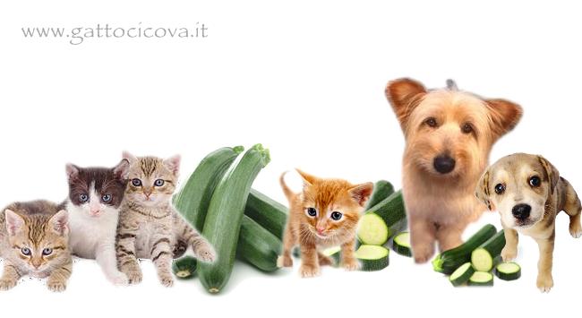 Il Cane e il Gatto possono mangiare Zucchine