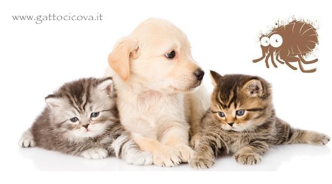 Pulci nel Gatto e Cane