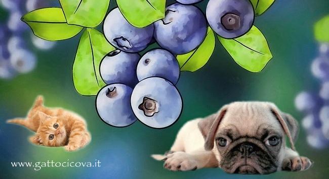 Vaccinium Myrtillus nel Cane e Gatto
