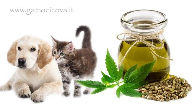 Olio semi di canapa gatto cane