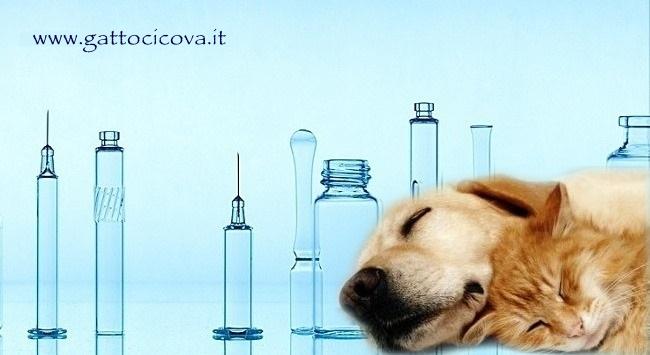 Accanimento Terapeutico Gatto Cane