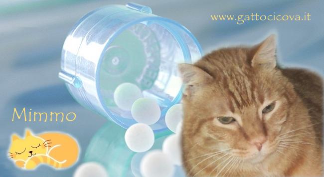 Tumore Cutaneo nel Gatto Mastocitoma