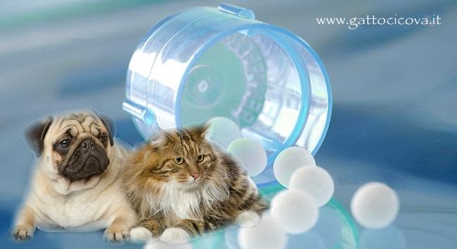 Malassorbimento Gatto e Cane