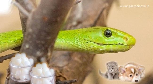 Veleno dei serpenti in omeopatia for Veleno per serpenti