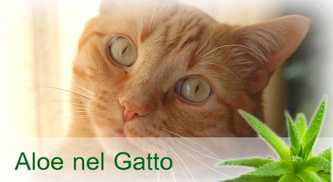 Aloe vera nel gatto