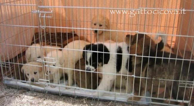 Traffico Illegale di Cani