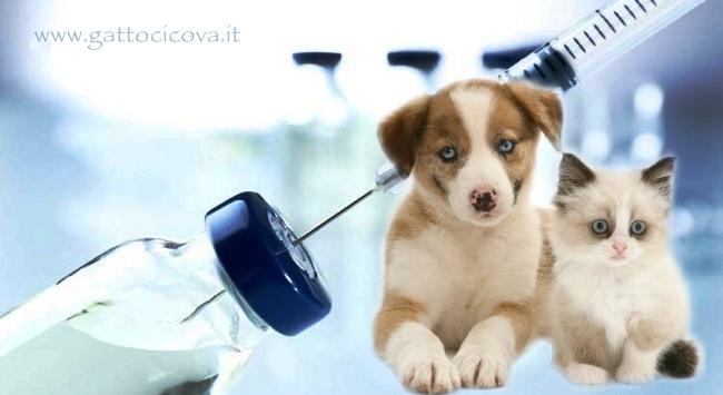 Vaccini Cani Gatti