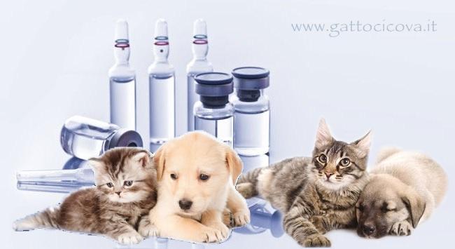 Titolazione Anticorpale Gatto e Cane