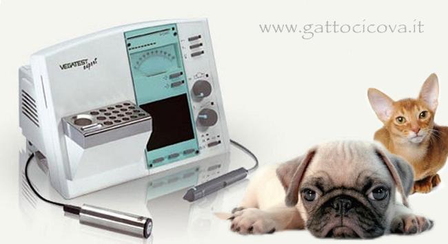 Vega test cane gatto