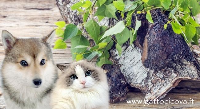 Chaga cane e gatto