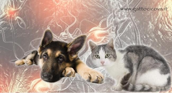 Infiammazione acuta cronica cane gatto