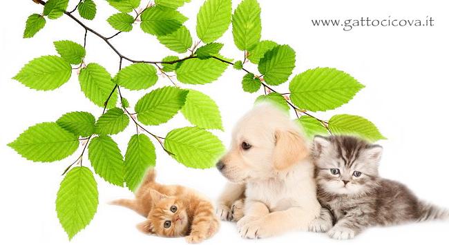 Fagus Sylvatica nel Cane e Gatto