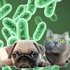 Sistema Linfatico nel Gatto nel Cane