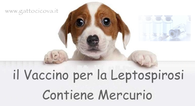 Vaccino Leptospirosi Cane Contiene Mercurio
