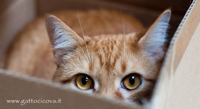 i Gatti Amano le Scatole di Cartone