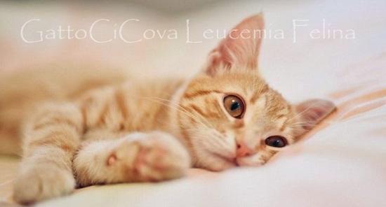 Leucemia Felina Rimedi Naturali