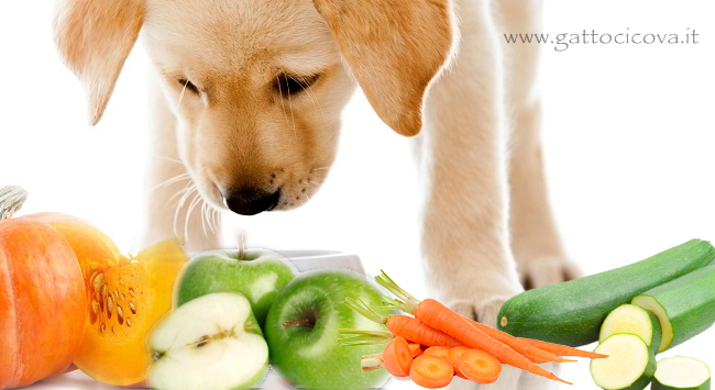 Verdure Ortaggi e Frutta per il Cane