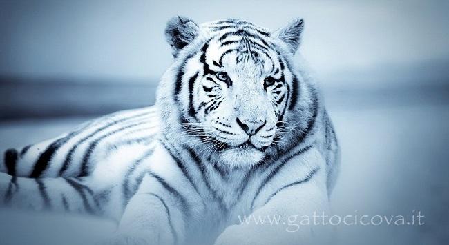 Tigre Specchio e Domatori dei Propri Istinti