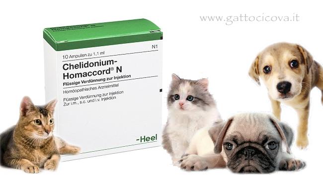 Chelidonium-Homaccord Gatto Cane