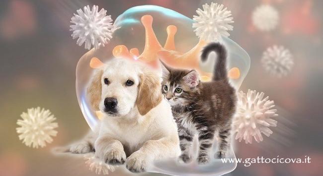 Leucocitosi Gatto Cane Aumento Globuli Bianchi