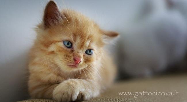 Segnali di Dolore nel Gatto