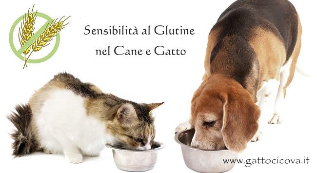 Intolleranza al Glutine Cane Gatto