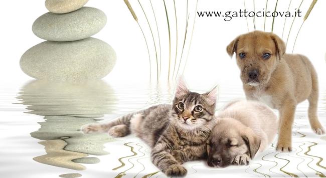 depurare cani e gatti