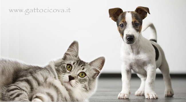 Lipoma cane gatto