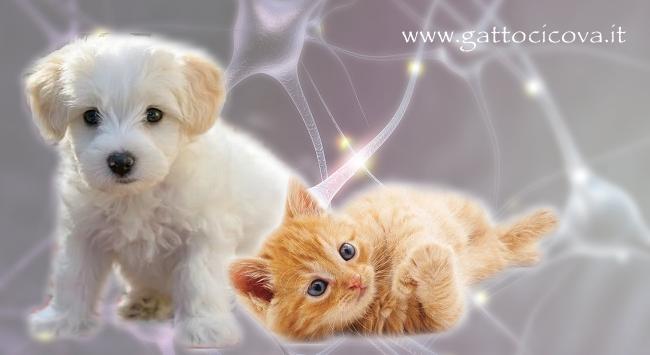 PNEI nel cane e gatto