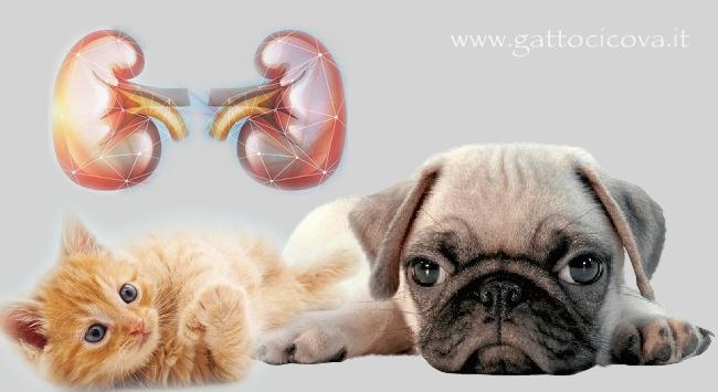 Proteinuria nel gatto e cane