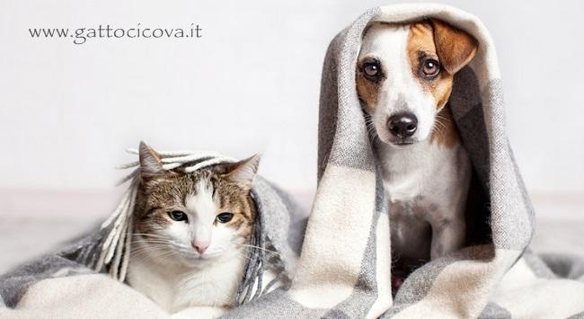 Influenza nel gatto e cane